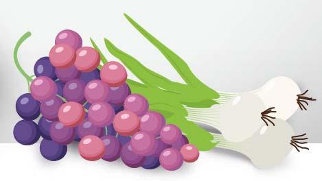 Illustration: Gemüse und Früchte